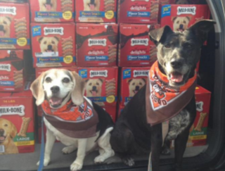 Dogs_Browns Backers of Pinellas